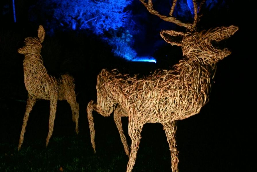 Willow sculpture of deer