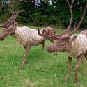 Willow sculpture of reindeer