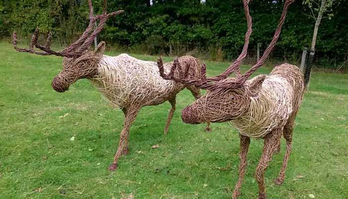 I was commissioned in October, 6 reindeer and a sleigh  by Lackock Abbey, a national trust site in Wiltshire. They are life sized and I decided to use glass eyes in them as well. They will be displayed each xmas period.  reindeer