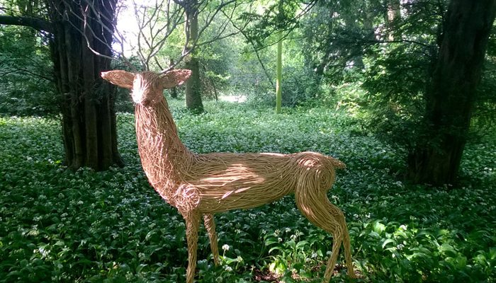 This Stag was created for an exhibition at Lacock Abbey, Wiltshire. Its made of white willow and has Ivy antlers, blue glass eys and silver hooves made of cans.