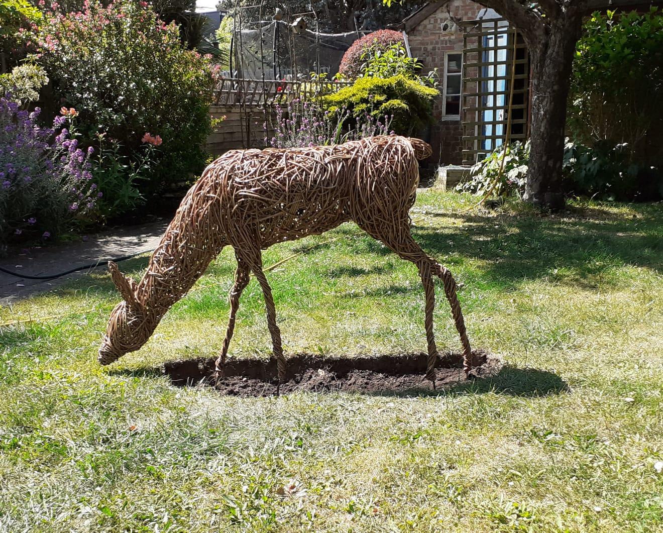 Willow Roe deer doe