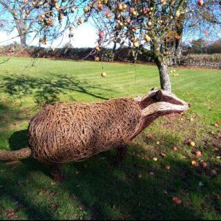 7 foot long Badger