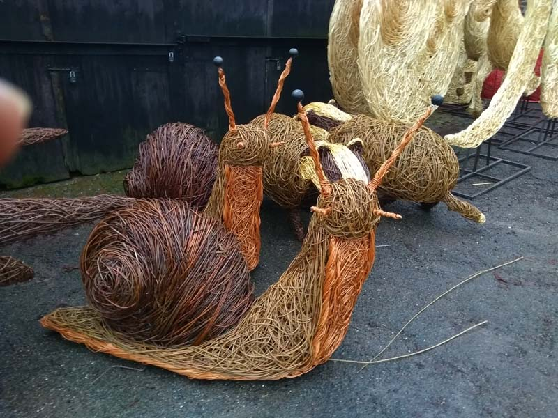 6 foot long giant willow snails